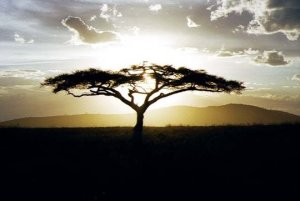 image_Afrique
